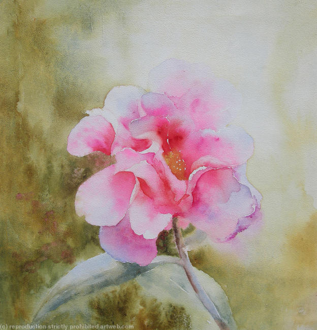 camelia watercolour 30x30cm