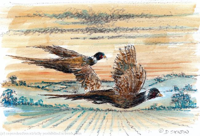 Morning Flight coloured artwork for a shoot card printed on shoot card from a pen, pencil and watercolour by Dick Skilton itemprop=