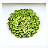 hidden Lime Green Hydrangea
