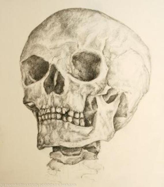 Skull Study Pencil 20x35cm