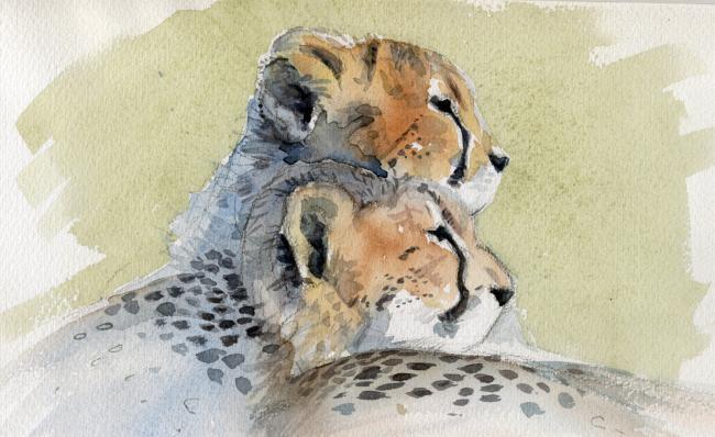 cheetah-cubs width=