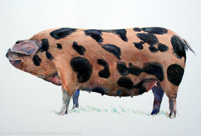 Oxford Sandy & Black - The 'Plum Pudding Pig' Watercolour 77x51cm