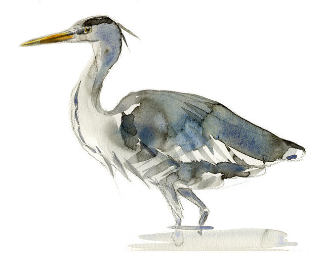 Heron 2 Signed giclee print. Supplied mounted and cellophane wrapped. width=