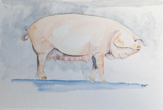 Berkshire pig drawing