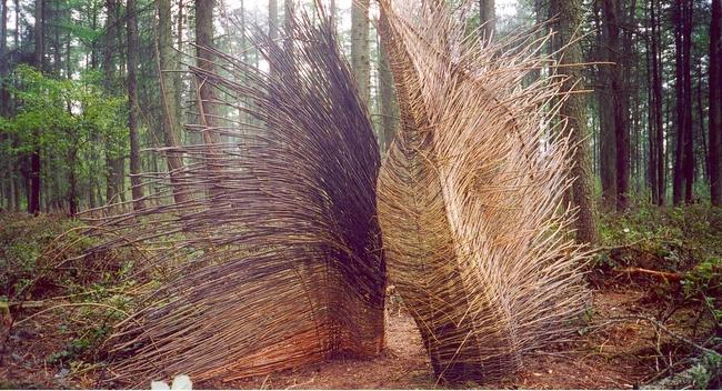 untitled Willow width=