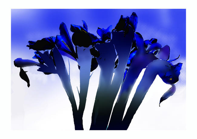 Stalking Iris ink-jet print on photo paper width=