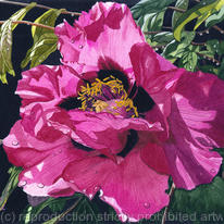 hidden Paeonia, Watercolour…