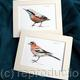 Garden bird Digital prins examples, each mount fits standard frame 9 by 7 inches. Prints sold as a single item at £8 each.