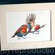 Robins, pair, digital print on watercolour paper mounted in a 7 by 9 inch mount to fit a standard frame.