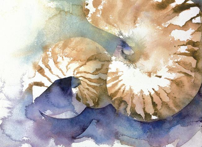 Ko 92 Nautilus By Kate Osborne