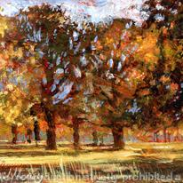 hidden Autumn trees, Chatsworth