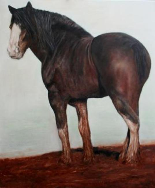 Shire Horse Oil on Canvas 120x130cm