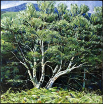 Summer birch, Glen Sannox