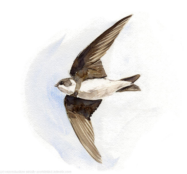 Sand Martin Signed giclee print. Supplied cellophane wrapped. 20x17cm