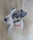 Sid the Jack Russell  SOLD  Commissioned