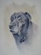 Chester the Labrador  SOLD  Commissioned