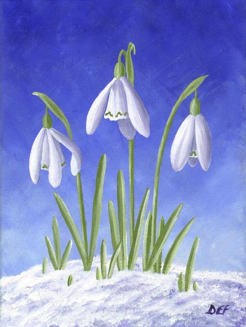 Three Snowdrops In Snow By Elise Ferguson