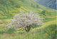 May Tree, Hartsop  by Christine Baines