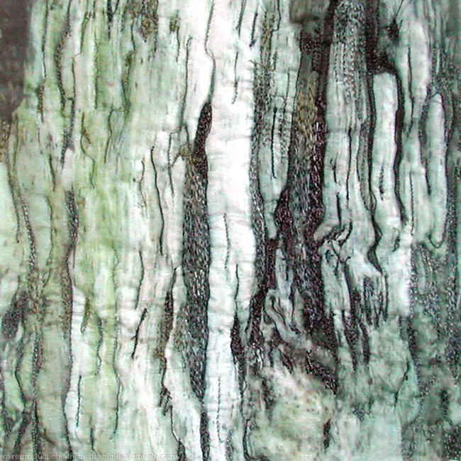 Bark Series By Diane Rogers